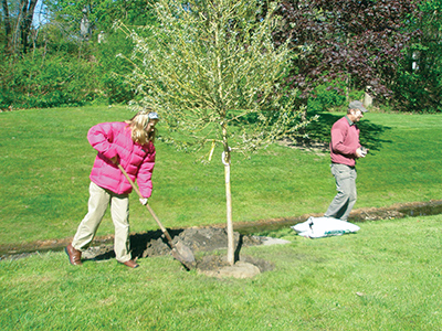 Elmwood Arbor Day tree planting 400